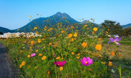 Yufuin Floral Village : une bourgade anglaise perdue en plein cœur du Japon