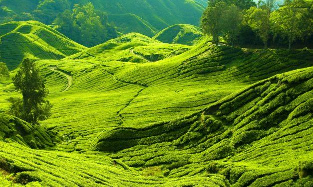 La Malaisie, une destination idéale pour un séjour reposant
