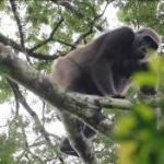 Un voyage au Gabon au cœur de la forêt vierge