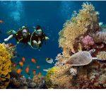 Les plus beaux spots de plongée sous-marine