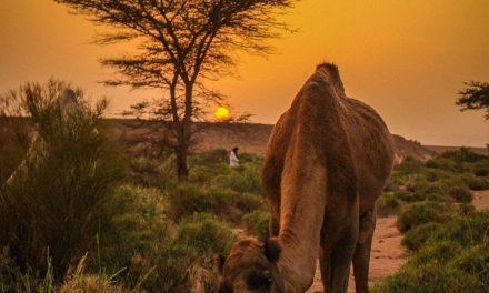 L'après-Covid… Retrouvez les joies du voyage à petits prix et faites le plein d'énergie dans le désert du Maroc !